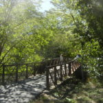 Day Tripping: What You Can Discover on the Bronx River and Beyond!