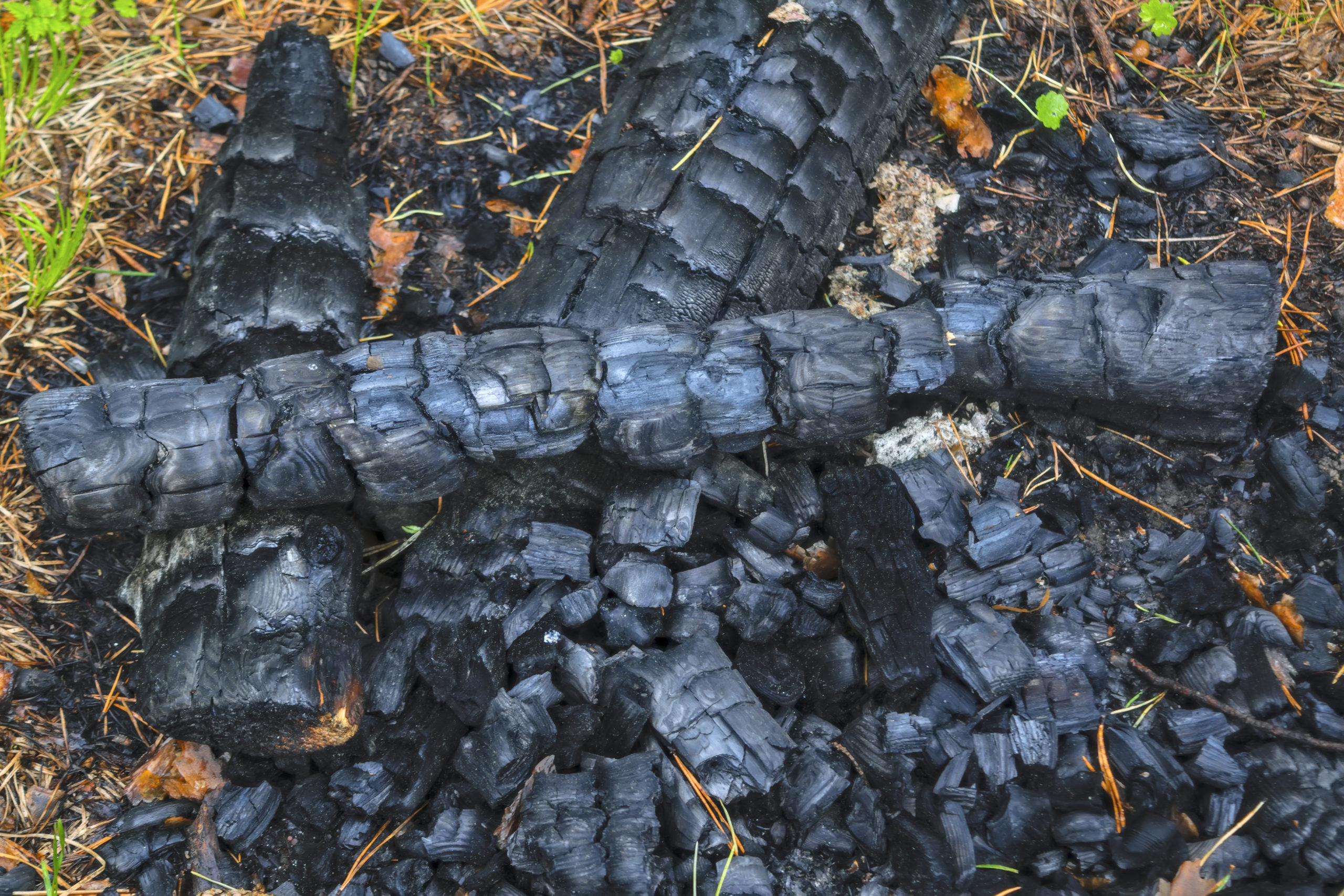 Charcoal of an extinct fire in the forest. Close-up. Natural background